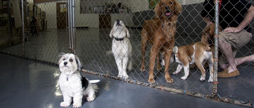 Chicago's Premier Dog Training Facility & Puppy School